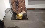 Baumstamm Bodenspiegel