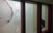 Fensterfolierung Sichtschutz