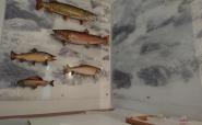 Plexi bedruckt für Fischpräsentation