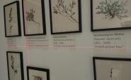 Beschriftung Aquarelle mit Wandfolie konturgeplottet