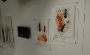 Ameisen  - Druck auf Plexi