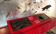 Beschriftung Vogelstation mit konturgeplotteter Klebefolie