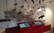 Vogellegende und Vogelquiz - Inbetriebnahme