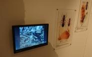 Monitor und Player für Ameisln