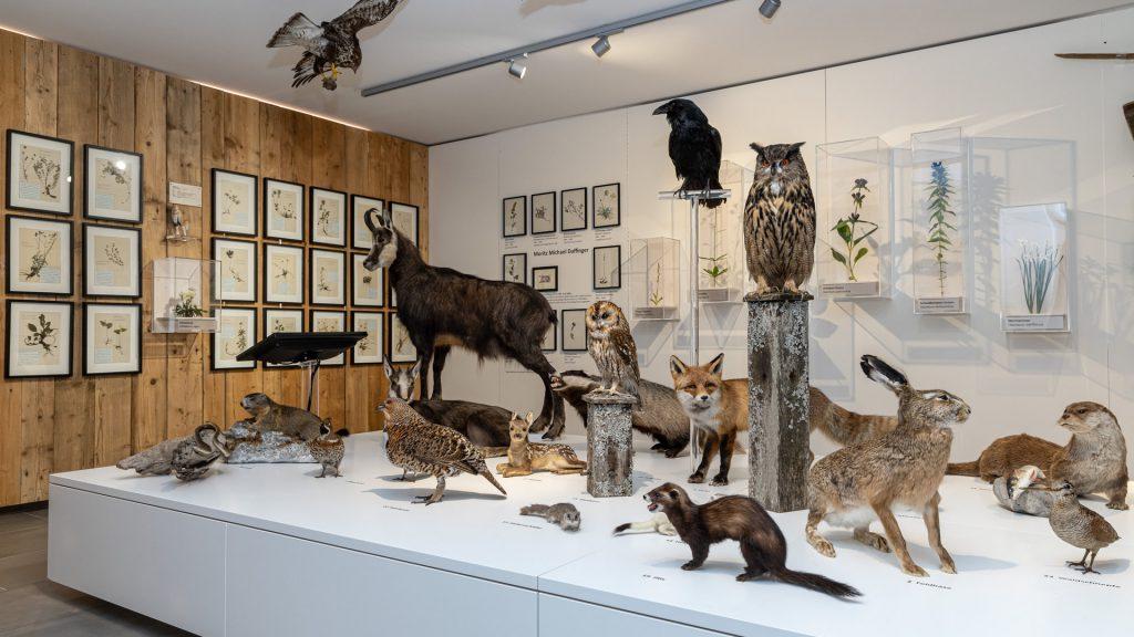 Naturkundemuseum im Heimathaus - Foto: Fred Lindmoser